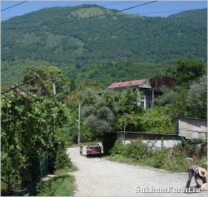 Растительный мир Абхазии