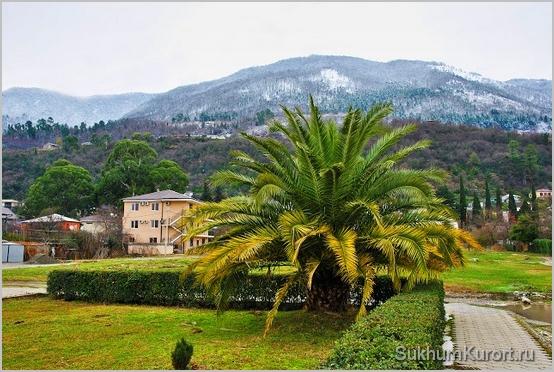 Зима в Абхазии - это пальмы и снег