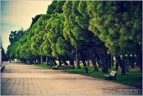 Солнечная зима в Абхазии - это норма